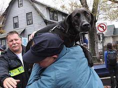 Miles de mascotas buscan a su dueño en EEUU tras el paso de Sandy