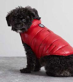 American Beagle Outfitters' Winter Wear Is Here via Brit + Co. Art Beagle, Beagle Puppy, Lemon Beagle, American Beagle, Purebred Dogs, Pet Gifts, Four Legged, Shih Tzu, Dog Owners
