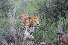 Uk Trip, Wildlife Photography, Safari, September, Travel, Animals, Instagram, Viajes, Animales