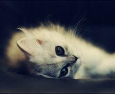 Kitty 2 By SilentPain0 Sweet Dreams Beautiful Friends