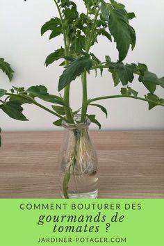 Green Tips, Plantation, Growing Vegetables, Permaculture, Horticulture, Indoor Garden, Vegetable Garden, Aloe Vera, Gardening Tips