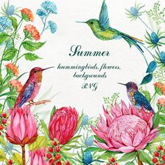 Hummingbirds Exotic Flowers Clipart ,Watercolor tropical Clip Art,Watercolor floral,watercolor floral 4 Png Hummingbirds Elements Flowers – Famous Last Words Bird Clipart, Flower Clipart, Art Watercolor, Watercolor Flowers, Love Photos, Cool Pictures, Exotic Flowers, Unique Flowers, Flower Backgrounds