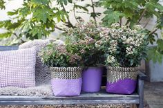 Even when it's not snowing, Viburnum brings snowballs to the garden, and if it does freeze, this garden plant stays green and brings an early… Balcony Garden, Garden Pots, Pot Lights, Container Flowers, Snowball, Winter Garden, Flower Pots, Planter Pots, Green