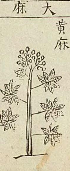 hemp  本草綱目 李時珍, Bencao Gangmu, Chinese materia medica, written by Li Shizhen (1590)