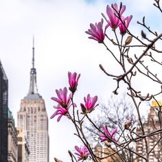 """Spring is here and flowers are blooming in New York…"" (Picture Credit: Javan Ng) Spring In New York, Rhapsody In Blue, I Love Nyc, City Aesthetic, Spring Is Here, Spring Time, City That Never Sleeps, Concrete Jungle, Empire State Building"