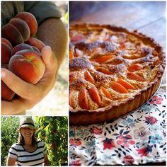 Apricot tart and Tarts on Pinterest