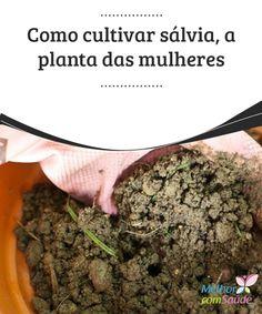 Como cultivar #sálvia, a planta das mulheres com diversos #benefícios  Você quer descobrir como #cultivar sálvia em sua #casa? Trata-se de uma das #plantas aromáticas mais conhecidas graças aos seus diversos benefícios.