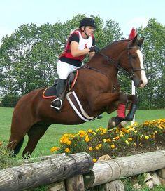 Georgian Grande CH Undercover-Sherman American Pharoah, American Saddlebred, High Horse, Triple Crown Winners, Year Of The Horse, Clydesdale, Friesian, Draft Horses, Show Jumping