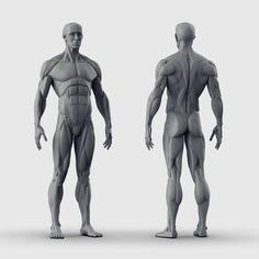Human Anatomy Sculpture 3D model OBJ ZTL Human Anatomy For Artists, 3d Anatomy, Human Anatomy Drawing, Human Body Anatomy, Anatomy Sketches, Muscle Anatomy, Anatomy Organs, Human Poses Reference, Body Reference