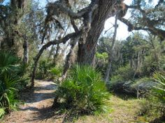 Florida Trail, Little-Big Econ State Forest