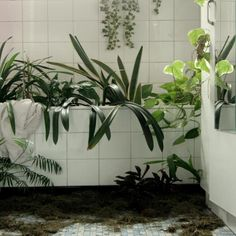 planttub