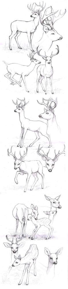 Draw a deer