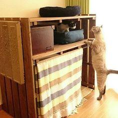 すのこを組み合わせて作った簡単シェルフを、猫ちゃん専用スペースに。カーテンの内側におトイレを設置。その上には猫ベットと爪とぎを置いています。すのこの色にあわせてカーテンの色をチョイス。