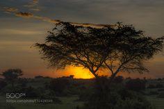 My Africa #PatrickBorgenMD