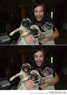 happy pugs! lol wth