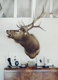 Stag #Taxidermy