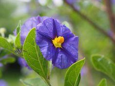 Flowers, Shrubs, Plants, Stars