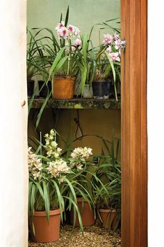 growing an orchid Orchid House, Garden Spaces, Outdoor Gardens, Orchids, Favorite Things, Outdoors, Gardening, Outdoor Furniture, Heart