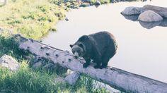 Bear Timber Nature Reserve(3840x2160)