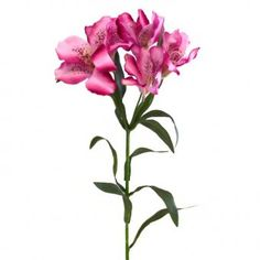 This artificial Alstroemeria (Peruvian Lily) flower stem has bright pink flowers and measures 61cm tall (23cm of leaves and 9cm of flowers).