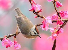 Primavera chega na quinta-feira, em dia de verão e inverno