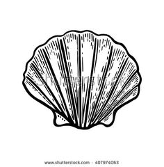 Sea shell Scallop. Black engraving vintage illustration. Isolated on white background