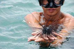 Seaurchin - Krabi Island