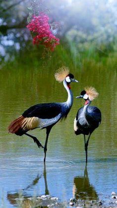 Very Pretty birds Pretty Birds, Love Birds, Beautiful Birds, Animals Beautiful, Exotic Birds, Colorful Birds, Exotic Pets, Animals And Pets, Cute Animals