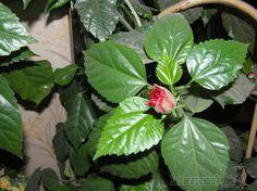 Подобрать подходящее удобрение для комнатных любимцев может быть непросто. Существует огромное количество органических и минеральных подкормок для любых типов растений. Люди, занимающиеся комнатным цв...