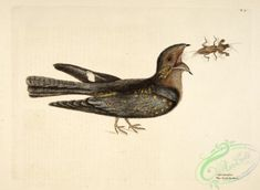 birds-21534 - Nightjars [2188x1600] - ocean animals domain engravings public Paper 1900s collection transfer digital fishing naturalist natural printable illustration ornaments Pictorial 1800s pages ichthyology masterpiece pre-1923 1700s old marine ArtsCult.com use water commercial ArtsCult 17th century beautiful art paintings clipart fish fabric nature Artscult animal lithographs craft free flying 300 dpi scan 18th nice pack collage wall books decoration supplies picture Graphic Edwardian…