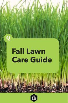 Fall Lawn Care Guide