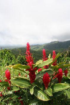 spatialdrift: Gorgeous Grenada