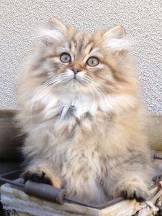 Furry kitten