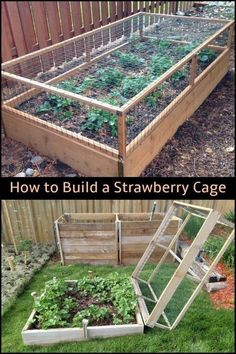 Diy raised garden – Keep your strawberries away from critters by building a strawberry cage! RaisedGarden OrganicGarden Gardens Diy raised garden – Keep your strawberries away from critters by building a strawberry cage! Garden Types, Backyard Vegetable Gardens, Vegetable Garden Design, Veg Garden, Garden Shrubs, Vegetables Garden, Garden Pots, Fence Garden, Outdoor Gardens