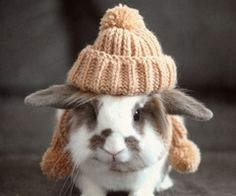 FOR @Sarah Green  (i know it's not at cake TOPPER, but it's a bunny TOPPER, so....)