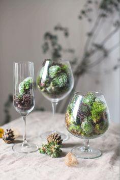 piante grasse vaso di vetro