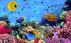 Aguas residuales amenazan arrecifes de Honduras