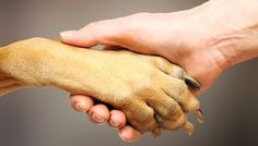 18 things you didn't know about dog paws.   If your dog is slipping on floors check out our vet approved toe grips! www.toegrips.com