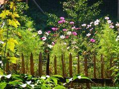 Einen Bauerngarten Planen, Anlegen Und Bepflanzen