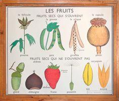 Botanique  Vintage  Affiche scolaire double face par LeRetroMarket