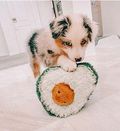 Super Cute Puppies, Baby Animals Super Cute, Cute Baby Dogs, Cute Little Puppies, Cute Dogs And Puppies, Cute Little Animals, Cute Funny Animals, Doggies, Baby Farm Animals