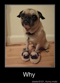 ".. sadly my sister-in-law bought her pugador ""PUGZ"" for christmas. poor thing."