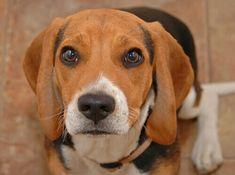 Il cane piange? Nel linguaggio canino, il pianto non può essere interpretato come fosse un modo di esprimere il proprio stato emotivo, come nelle persone.