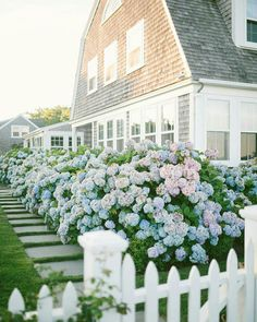 Hamptons House on Spring baby! Love that this beautiful home is completely surrounded by Hydrangeas Via adashofdetails . Hydrangea Landscaping, Driveway Landscaping, Landscaping Plants, Stone Landscaping, Walkway, Hortensia Hydrangea, Hydrangea Garden, Hydrangeas, Beautiful Gardens
