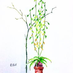 "A wild plant was growing in the vase that grandma left next to the window for four years. One day we found another unknown plant was growing next to it. Boys, the plant grew so much it reached the ceiling. You guys know the story of ""Jack and the Beanstack,"" right? #drawing  #watercolor  #wildplanet  #jackandthebeanstack Uma planta silvestre estava vivendo, durante 4 anos, num vaso que deixei perto da janela. Um dia uma outra planta que nem sei o nome, surgiu e começou a crescer a seu lado…"