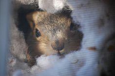 Squirrel's Nest in my Window by bouldertrex, via Flickr