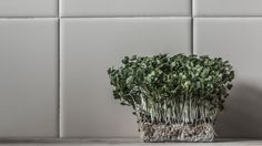 Rita Rodner is using the world's most passionate photo sharing community. Space Kitchen, How To Dry Basil, Objects, Herbs, Abstract, Plants, Summary, Herb, Plant