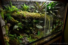 Click the image to open in full size. Terrariums Gecko, Tropical Terrariums, Gecko Terrarium, Terrarium Reptile, Aquarium Terrarium, Planted Aquarium, Gecko Vivarium, Reptile House, Reptile Room