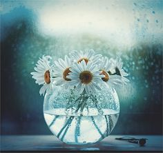 art-and-dream: Still life photography by Andreeva