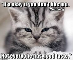 Top 25 Memes of The Week - Cheezburger Users Edition - World's largest collection of cat memes and other animals Cute Animal Memes, Funny Animal Quotes, Funny Animal Pictures, Cute Funny Animals, Cute Baby Animals, Cute Cats, Funny Cat Memes, Funny Dogs, Cats Humor
